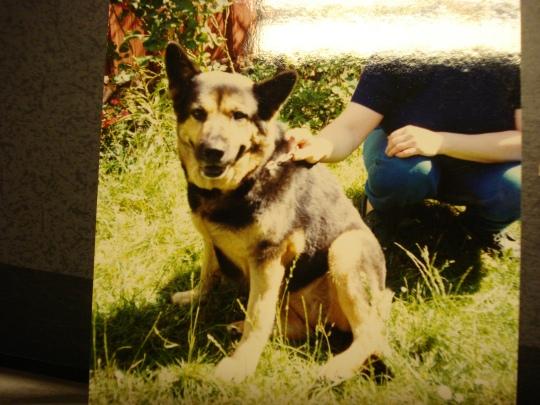 tanja, familjens andra hund